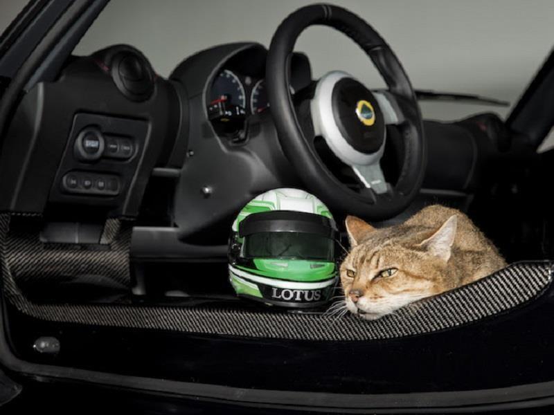 Casco para gato de Lotus