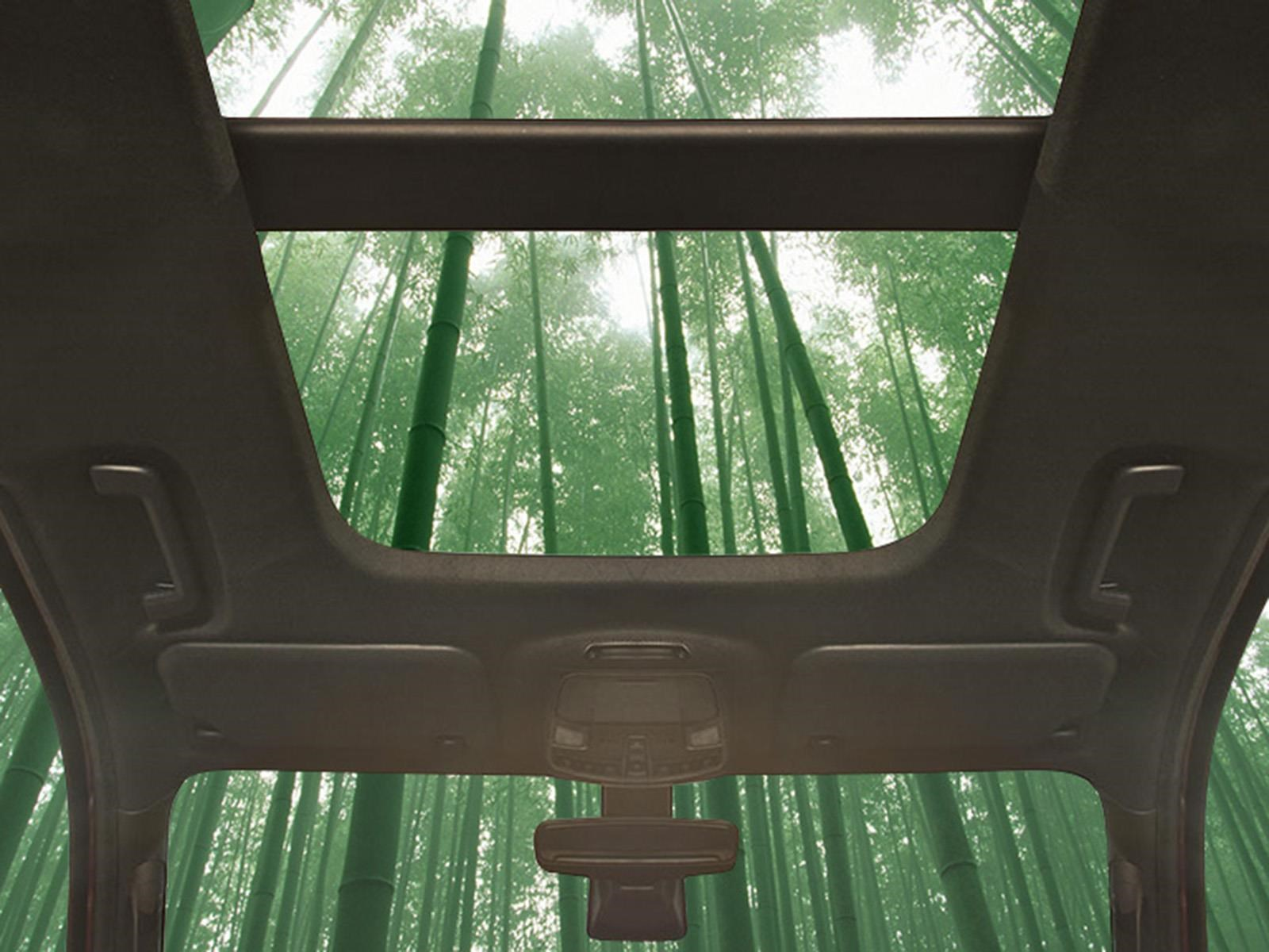 Ford podría utilizar bambú en sus vehículos