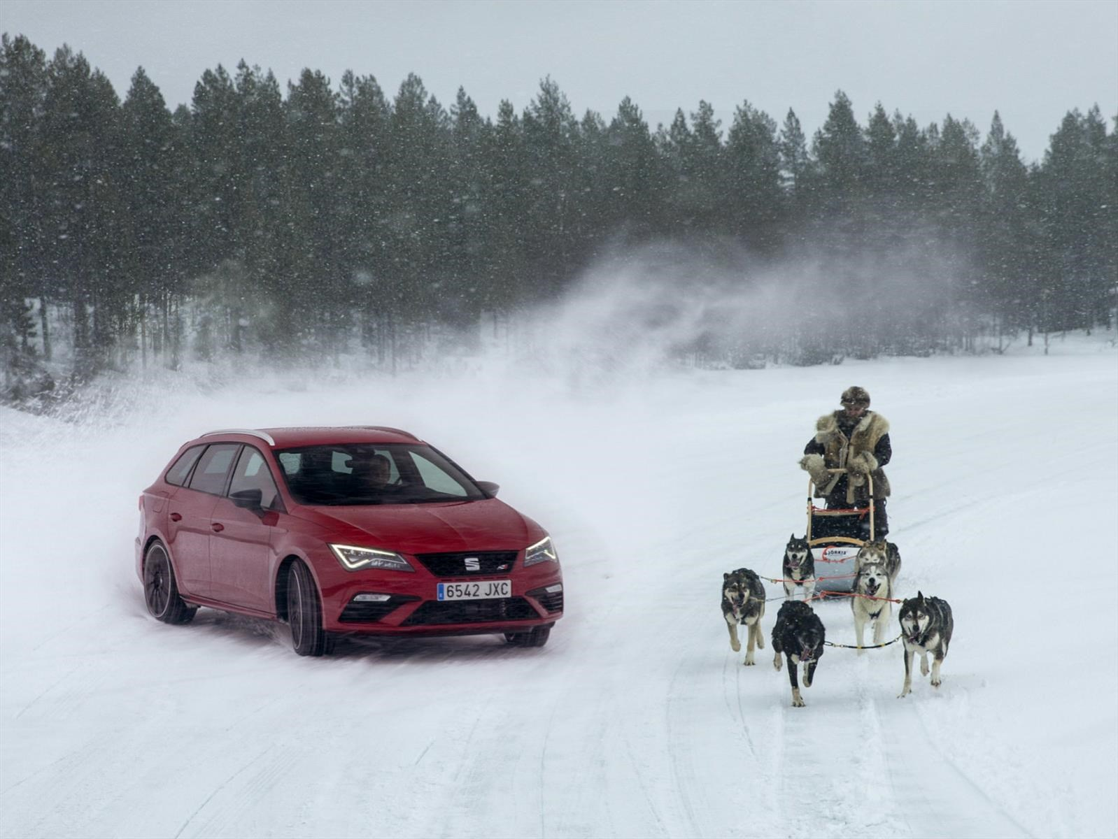 Un León contra seis perros en la nieve ¿Quién gana?
