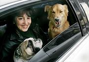 Tips para transportar a tu mascota con seguridad