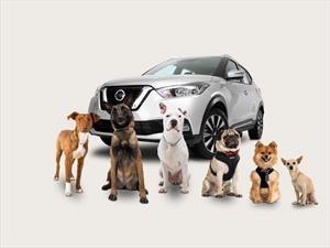 10 consejos para viajar con tu mascota en el carro