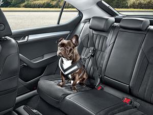 Skoda presenta un cinturón de seguridad para mascotas