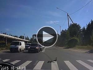 Video: Una sorpresa que te va a hacer suspirar