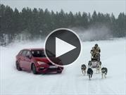 SEAT León CUPRA vs seis perros en la nieve, ¿quién gana?
