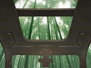 Ford estudia el uso del bambú en sus autos