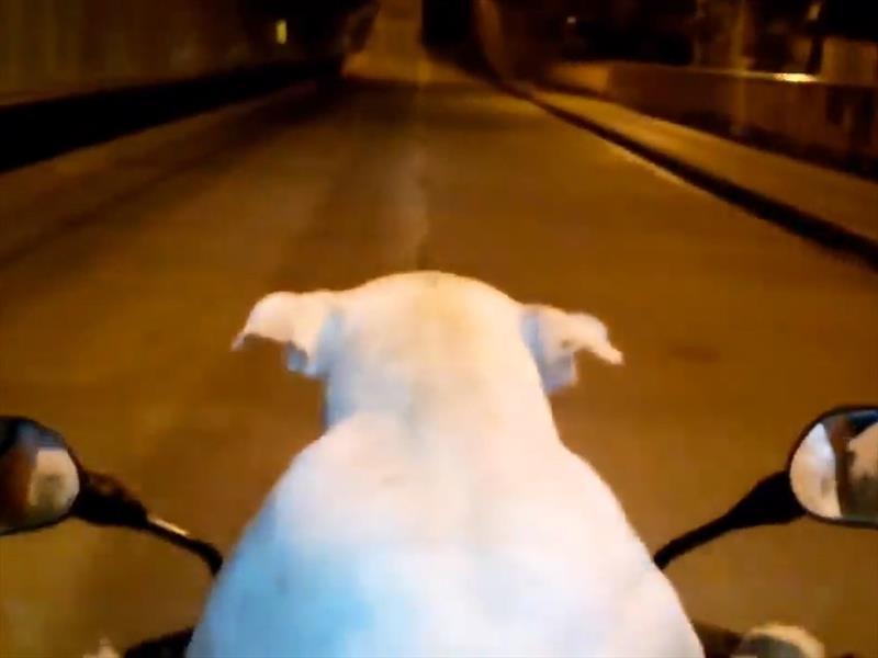 Video: Un Perro conduce motocicleta en Colombia