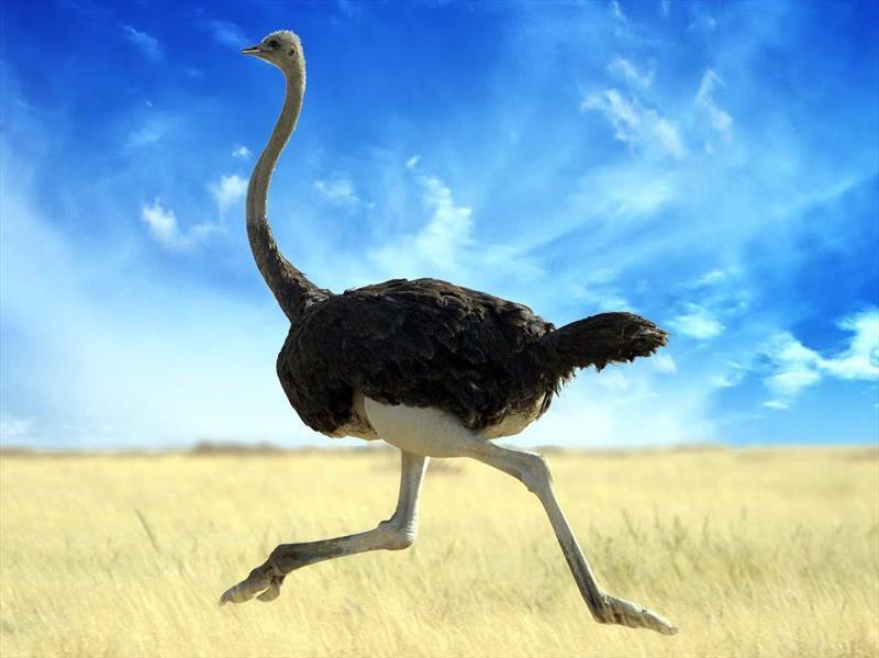 ¿Por qué Mercedes-Benz tiene una granja de avestruces en Sudáfrica?