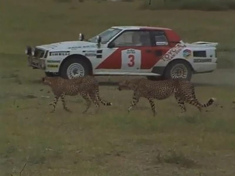 Rally Safari (África)