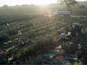 Ford y José Cuervo desarrollan un plástico natural a base de agave