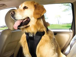5 riesgos de manejar con una mascota abordo