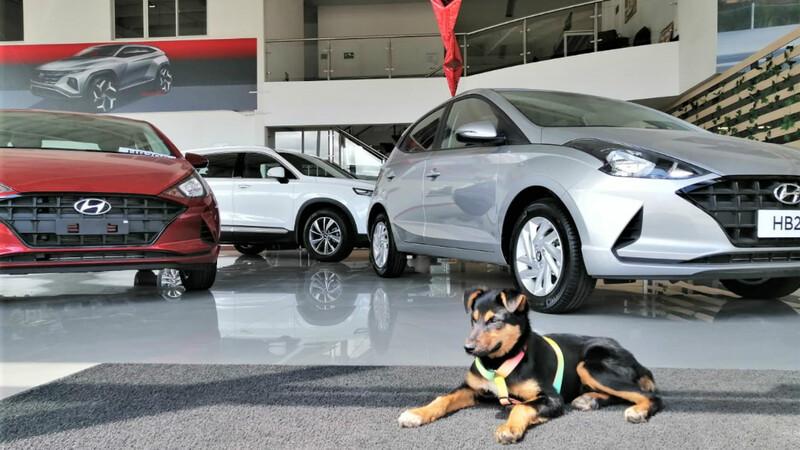Hyundai Colombia, en la onda pet friendly