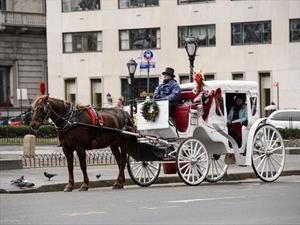 Carruajes jalados por caballos de Central park podrían ser reemplazados con autos eléctricos