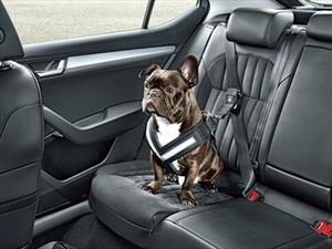 En Tennessee ya puedes dañar un auto para rescatar animales del interior