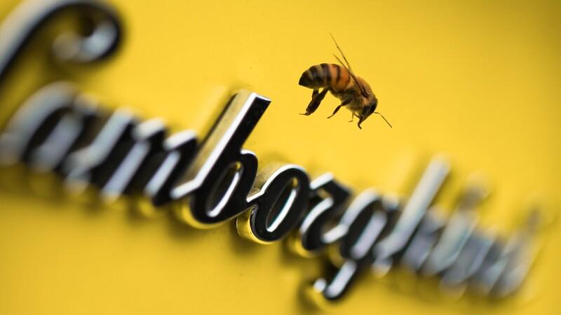 ¿Sabías que Lamborghini trabaja con abejas?