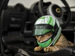 Lotus desarrolla un casco para gatos