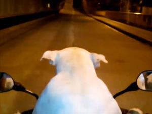 Video: Un Perro conduce motocicleta en Colombia