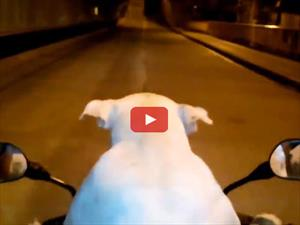 Video: En Colombia hay un perro motoquero