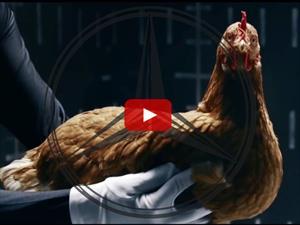 Video: Mercedes Benz explica su sofisticada suspensión con una gallina