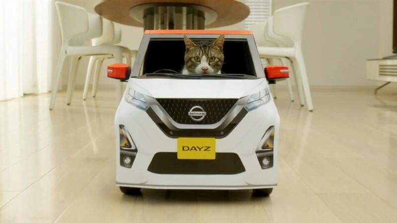 Gatos conducen un Nissan Dayz en Japón