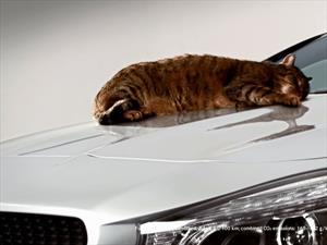 Video: Mercedes-Benz CLA comprueba su aerodinámica con un gato