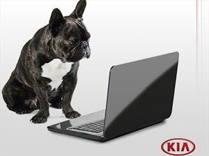 KIA Pet, una guía virtual para hacer felices a las mascotas