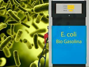 Crean gasolina sintética con la bacteria de la diarrea