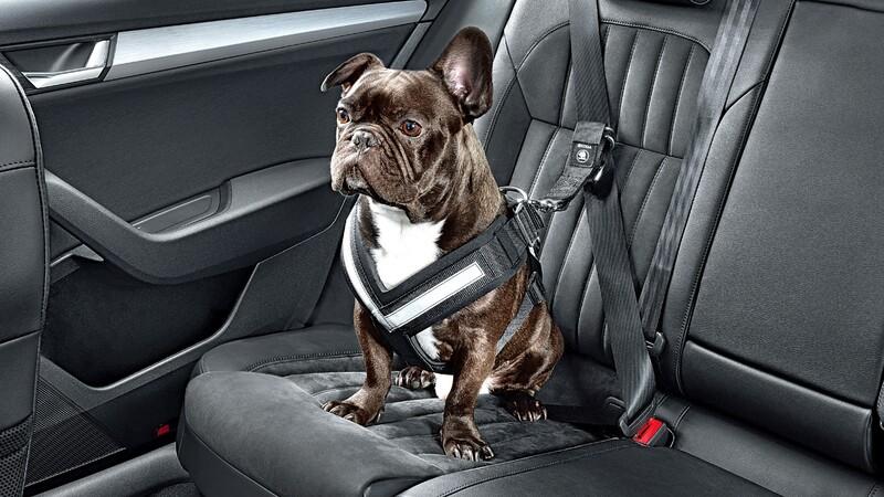 Por qué es peligroso llevar sueltas las mascotas en el interior del automóvil