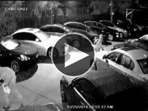 Se roban 8 autos de un concesionario en Tampa Bay