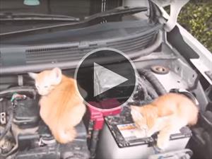 Nissan nos recuerda revisar que no haya gatos bajo el cofre
