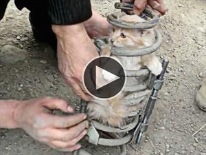Video: Gato queda atrapado en el resorte de una suspensión