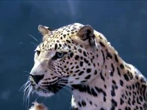 "Video: Jaguar responde a Mercedes-Benz y le pone la ""piel de gallina"""