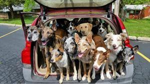 Cómo limpiar los pelos del perro de los asientos del auto