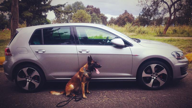 Día mundial del perro: 5 tips para llevar seguro en el auto a tu amigo peludo