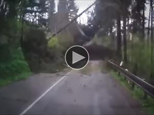 Video: Mirá el susto que se llevan en el bosque