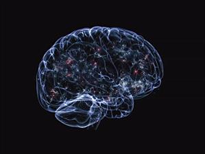 ¿Cómo reacciona el cerebro humano a bordo de un Porsche 911 GT3?