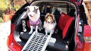 Nissan X-Trail Pets, un SUV pensado en las mascotas
