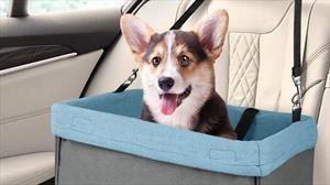 Importancia de que las mascotas viajen seguras en el automóvil