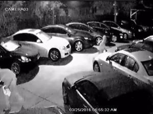 Roban ocho autos de un concesionario en Tampa Bay