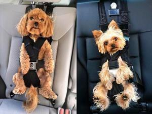 Conoce este curioso cinturón de seguridad para perritos