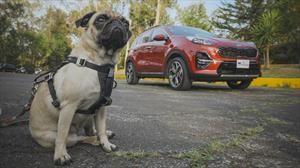 Mascotas en el auto: todo lo que necesitás para viajar con seguridad y comodidad