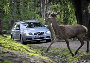 Volvo trabaja en sistema que evita el atropello de animales