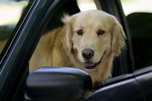 10 opciones de autos para que tu perro viaje seguro