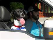 """Ford presenta """"Los perros pasean adentro"""""""