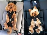 Seguridad canina: Conocé al cinturón de seguridad para mascotas