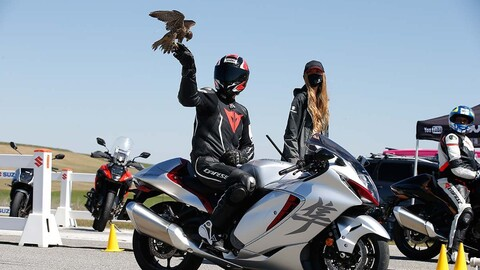 Suzuki Hayabusa mano a mano contra un halcón que vuela a 300 km/h
