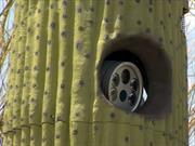 Instalan cámaras de velocidad en cactus falsos