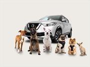 10 tips para ir con tus mascotas en el auto