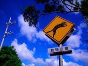 Si manejás en Japón o en Taiwán, ¡Tené cuidado con los gatos!