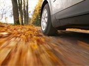 Conducir sobre un asfalto cubierto de hojas secas, podría ser peligroso