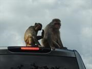 Automotrices alemanas acusadas de experimentar en monos y personas